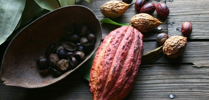Comment consommer les fèves de cacao pour maigrir ?