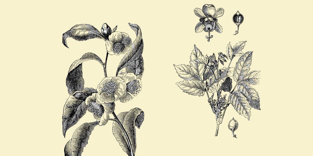sapna minceur à base de plantes peut période deffet de perte de poids