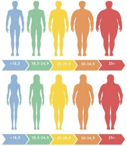 Comment calculer mon pourcentage de graisse facilement?