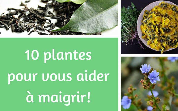 herbes naturelles pour vous aider à perdre du poids