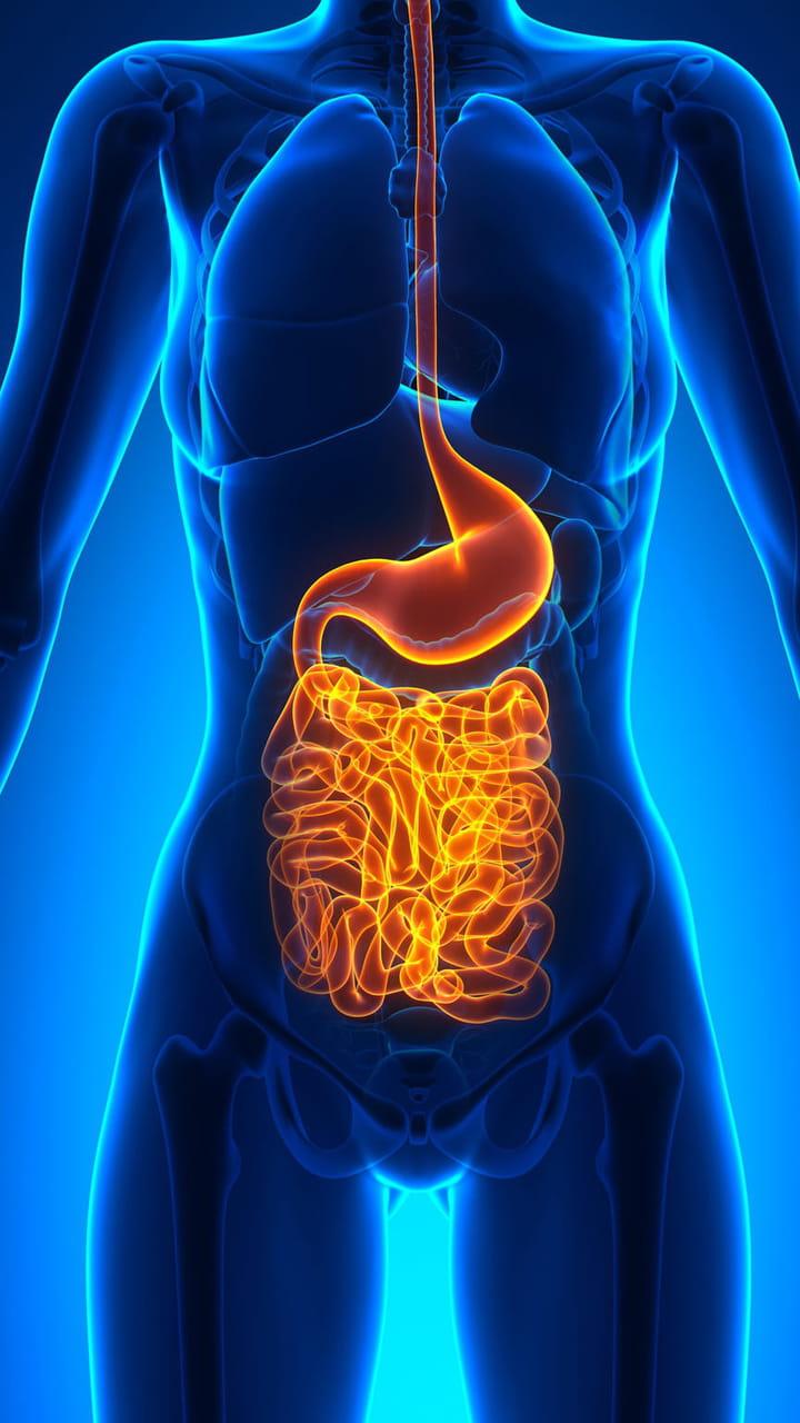 perte de poids pendant des semaines la thyroxine peut-elle entraîner une perte de poids