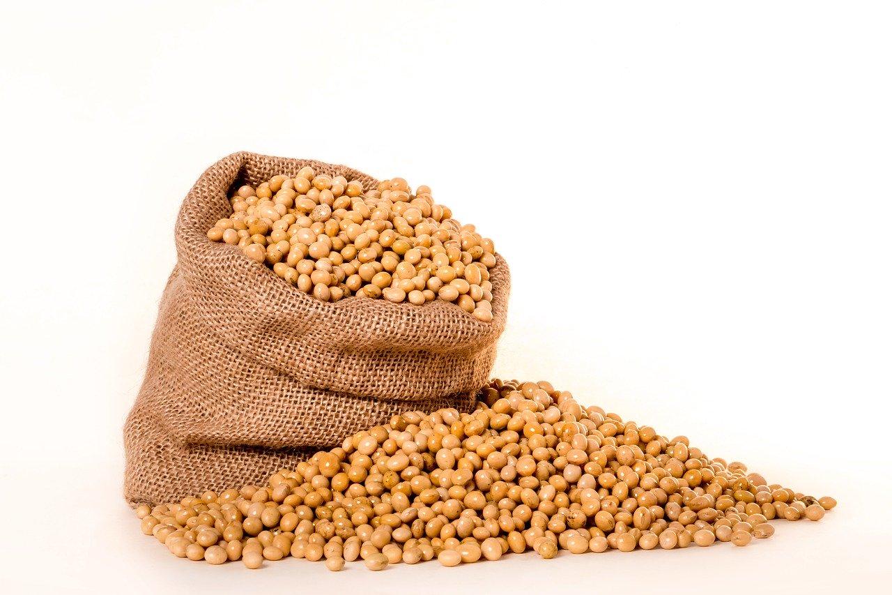 Le paneer de soja est-il bon pour la perte de graisse