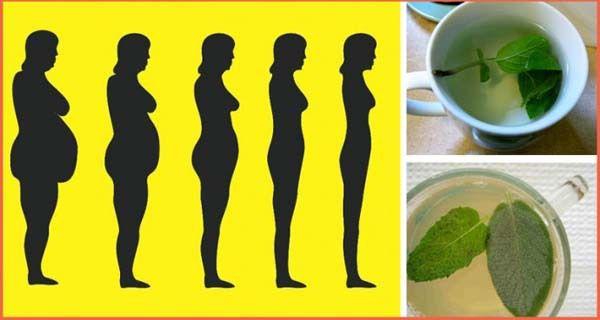 la perte de graisse libère des toxines niveau prospérer résultats de perte de poids