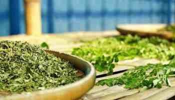 feuilles de menthe séchées pour perdre du poids