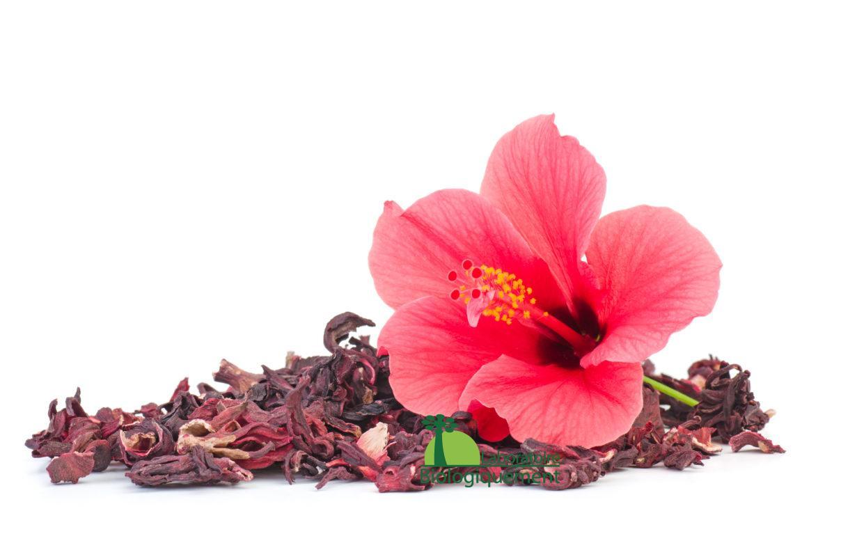 14 les Bienfaits de l'Eau-de-Jamaïque - Comment-à, de recettes, de Conseils