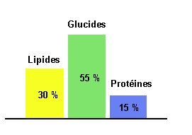 taux métabolique basal après perte de poids