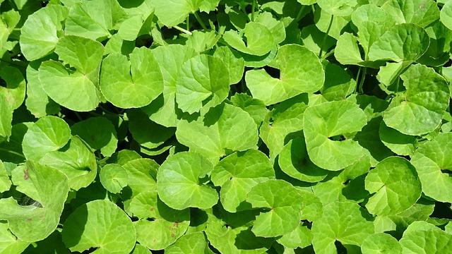 sapna minceur à base de plantes meilleure application de perte de poids pour ipad