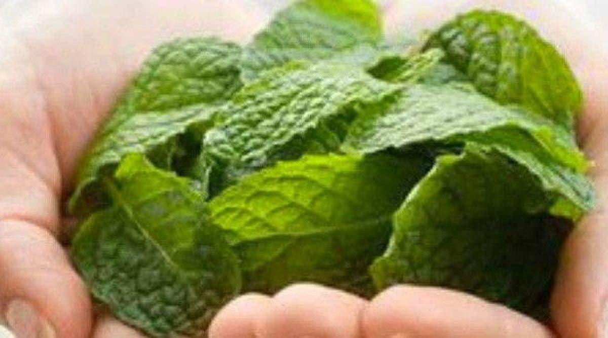 thé au lotus pour perdre du poids bangladesh perte de poids