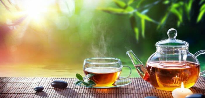 Quel thé pour maigrir : comparatif des thés minceur