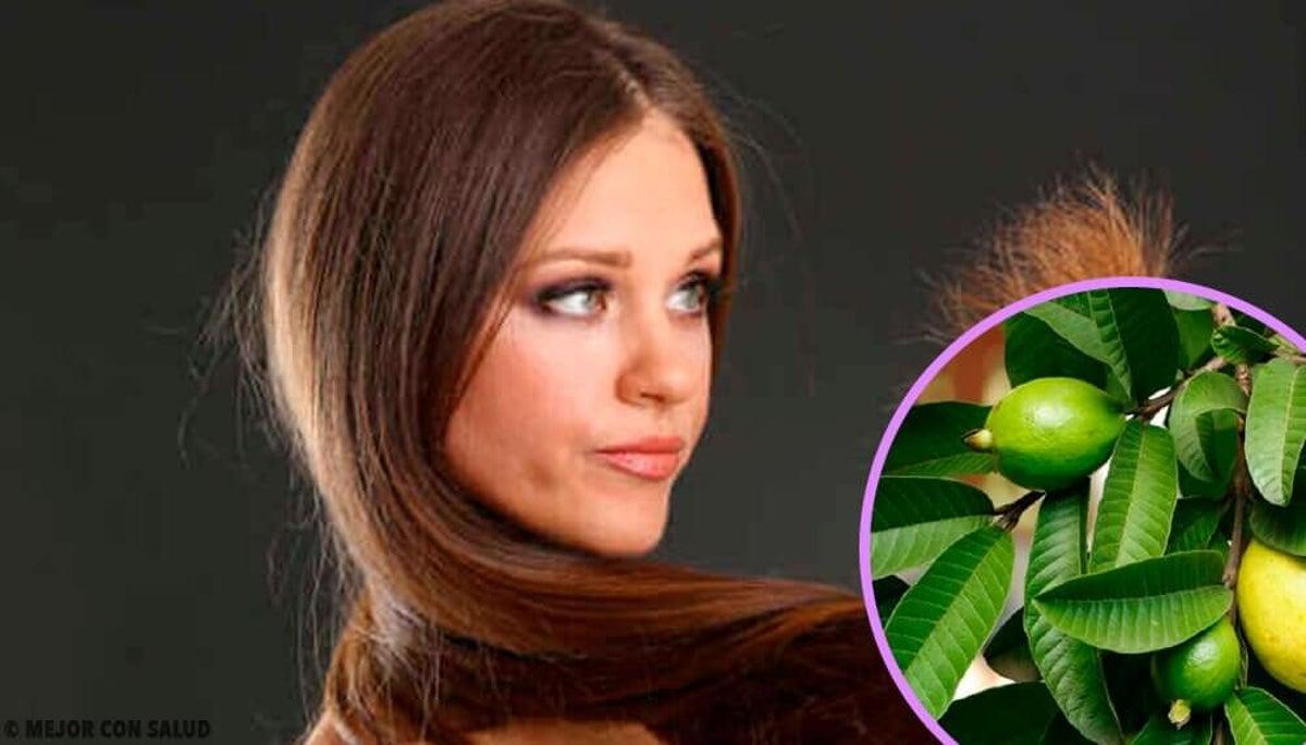 Les feuilles de goyave peuvent-elles vous aider à perdre du poids