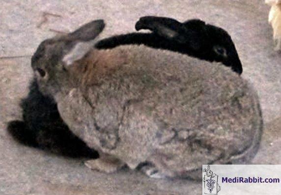 perdre du poids signification en ourdou