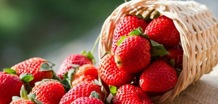 Les fraises sont-elles bonnes pour perdre du poids