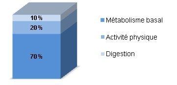 augmentation du métabolisme pour perdre de la graisse