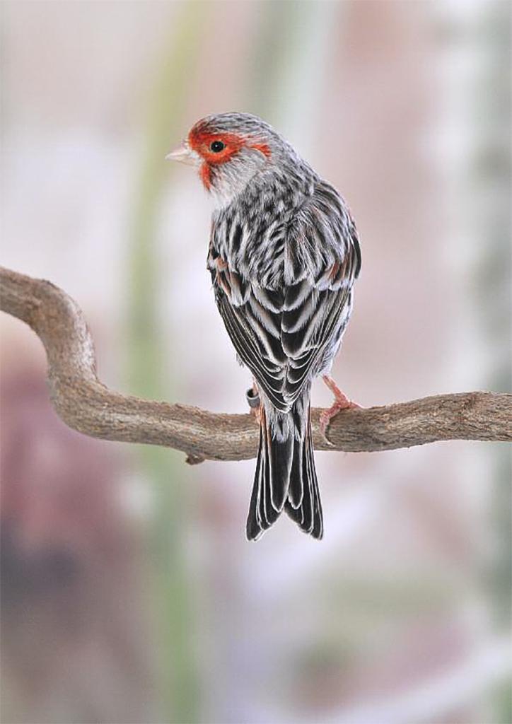 causes de la perte de poids chez les oiseaux thé de perte de poids de dherbes