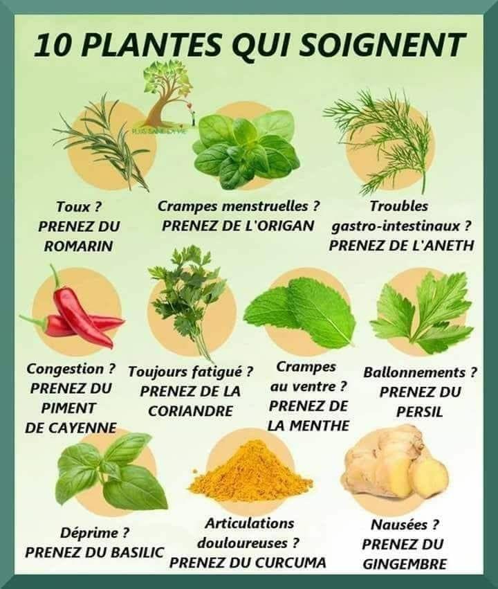 herbes naturelles qui vous font perdre du poids