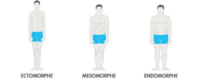 type de corps endomorphe de perte de graisse