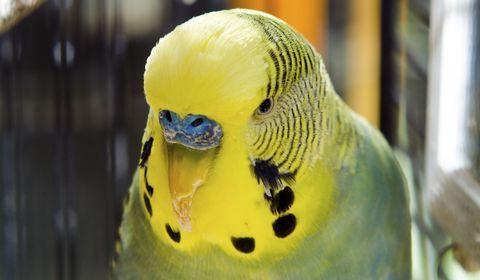 causes de la perte de poids chez les oiseaux suppléments de perte de poids de bodybuilder
