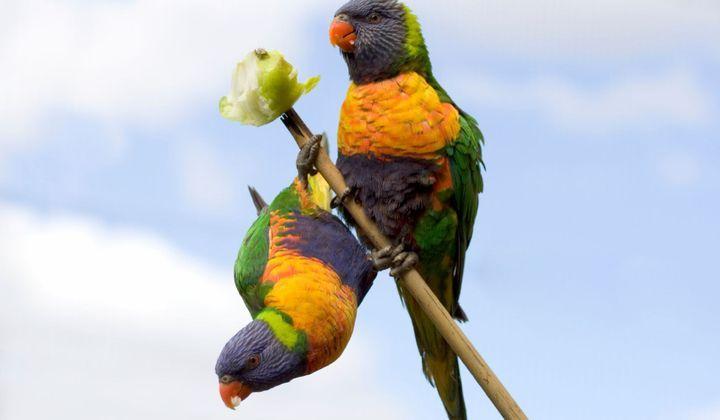 causes de la perte de poids chez les oiseaux comment lui dire de perdre du poids