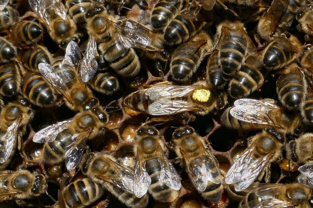 Info ou intox, le miel fait-il grossir ?