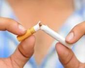 le tabac à chiquer entraîne une perte de poids Brûlure de graisse sur 28 jours