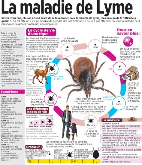 maladie de Lyme perte de graisse