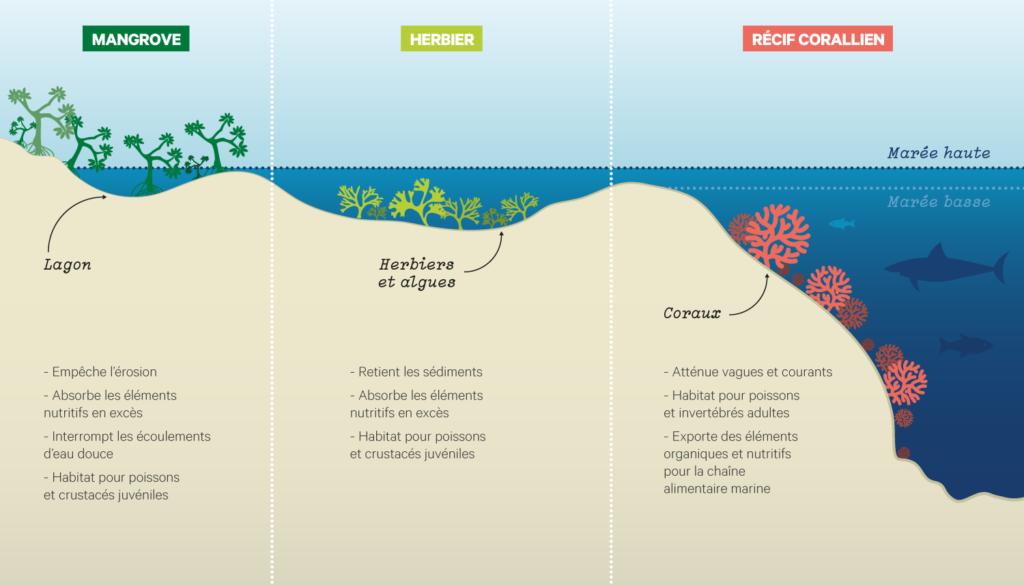 perte de poids cape corail