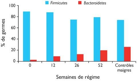 Pourquoi un microbiote déséquilibré fait grossir | davidpicot.fr