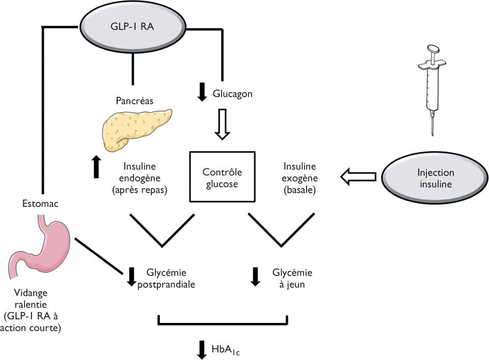 mécanismes derrière la perte de poids induite par glp-1