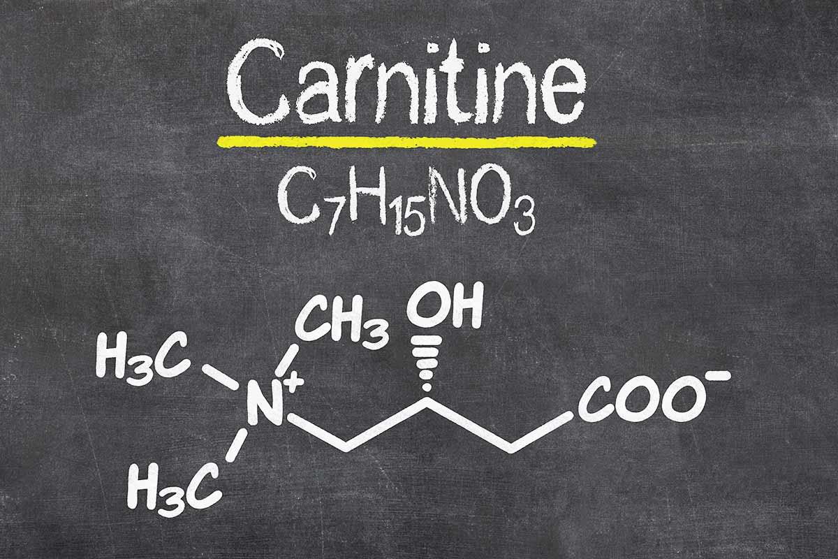L-Carnitine : Conseils d'utilisation et quand la prendre   Toutelanutrition